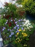 庭に咲く花2