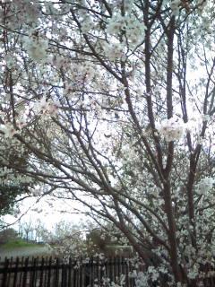何て素敵な春一番!