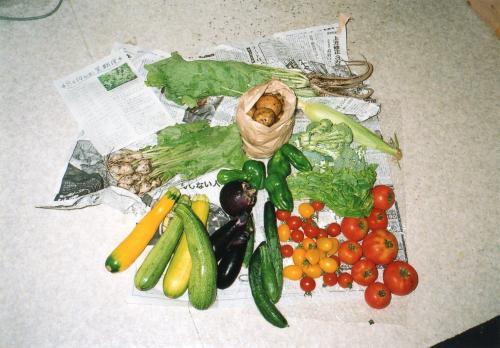 8月の野菜