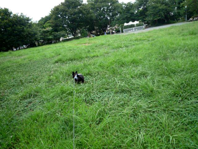 草ぼうぼう