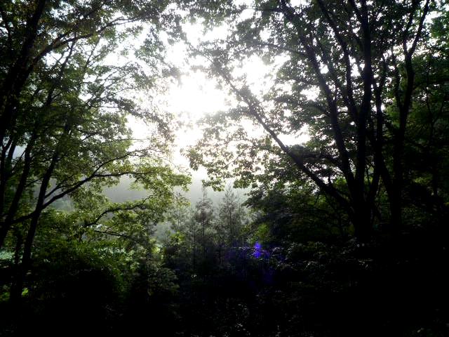 朝の光妖精