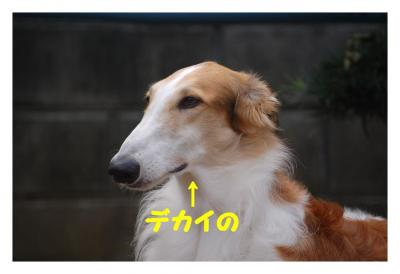 20071005133515.jpg