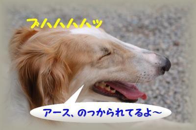 20071008141045.jpg