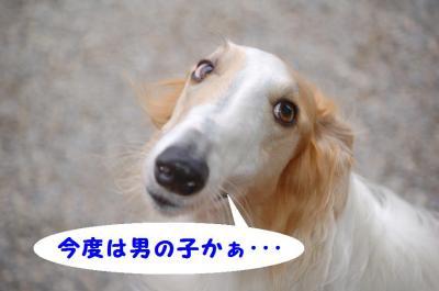 20080106152141.jpg