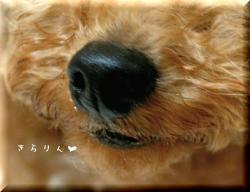 今日のべびーちゃん39