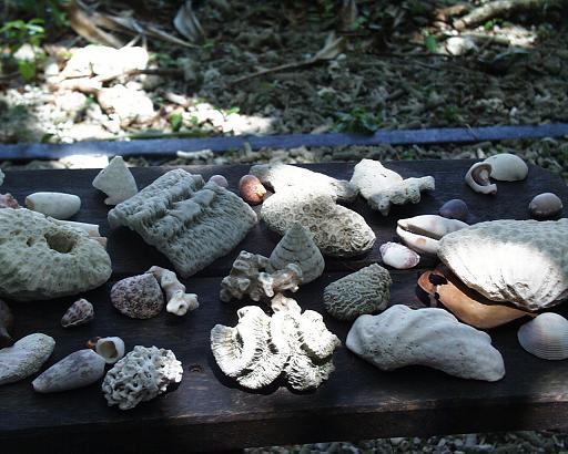 珊瑚のなきがら