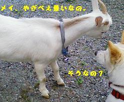 sankaku5.jpg