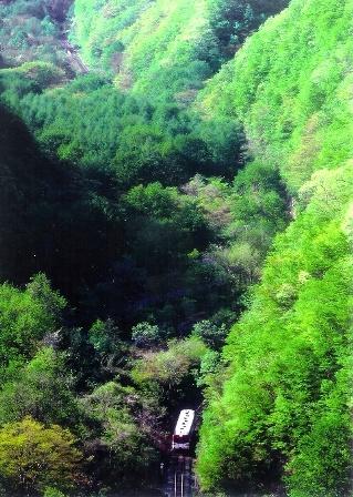 眩しい緑の岩泉線