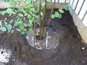 庭木の植え方その1