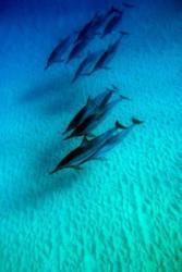 イルカの大群3