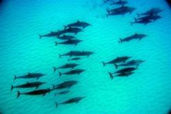 イルカの大群1
