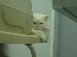 動物病院の猫2