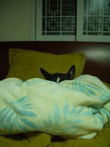 ばあさん昼寝