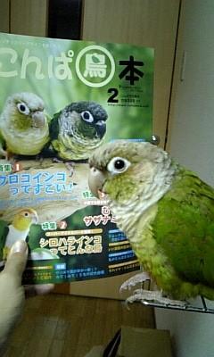 プーさんと鳥本