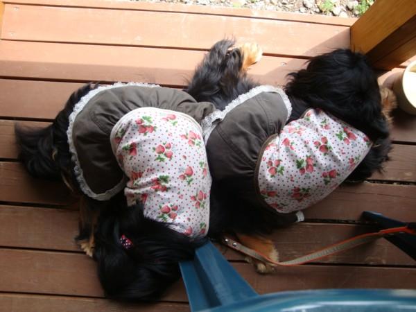 奈々・芽衣お疲れでおやすみ。