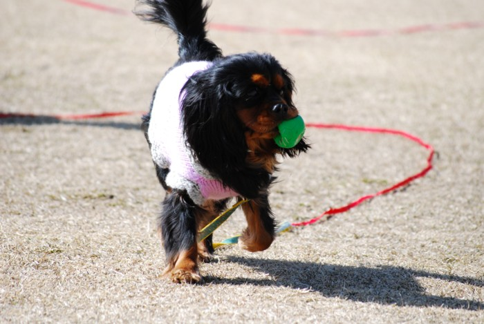 ボール持って、ご機嫌!!