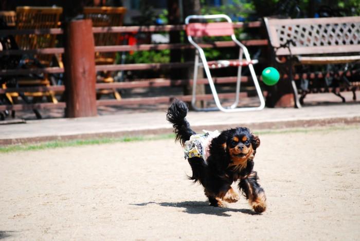 ボールを追うめい。。。