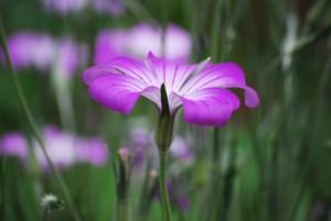可愛い花。