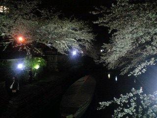 船町の夜桜