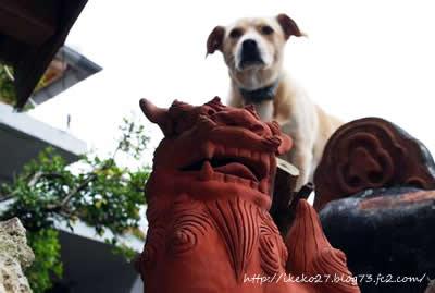 シーサー&犬