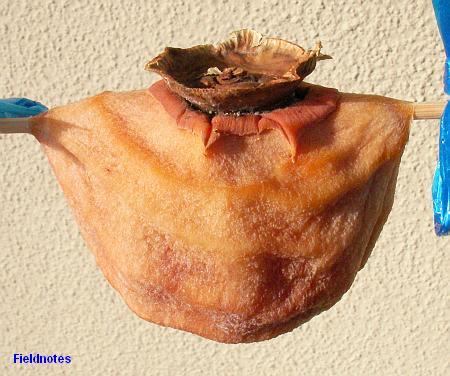 16日目の干し甘柿