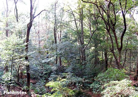 明治神宮の原生林のような森