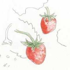 秋寅イチゴ
