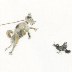 カラスとイヌ