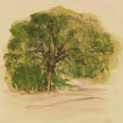 おっきょい樹