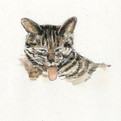 ネコ歯磨き