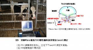 BSE検査装置
