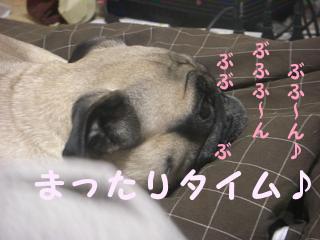 わんこと歯磨き-1