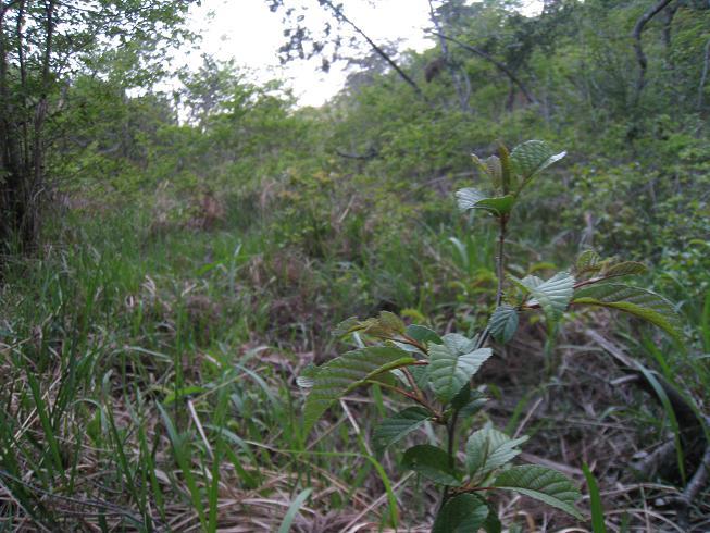 湿地 2009.05.10