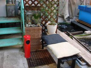 2008.11.4伊藤養魚場池コーナープチ改装画像 (4)