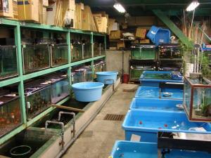 2008.11.4伊藤養魚場池コーナープチ改装画像 (3)