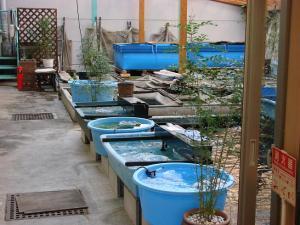 2008.11.4伊藤養魚場池コーナープチ改装画像