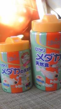 2008.11.29メダカの天然食