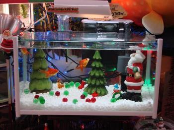 2008.12金魚なクリスマス (1)