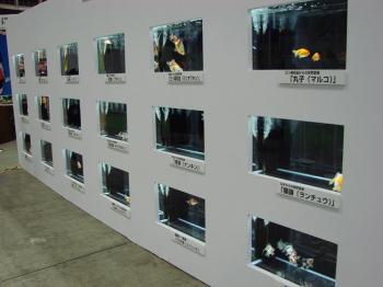 ジャパンペットフェア2009【金魚】