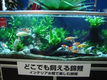 ジャパンペットフェア2009【GEX】 (17)