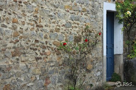 t花の家1IMG_4595