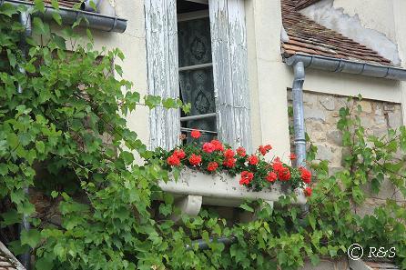 t花の家14IMG_4737