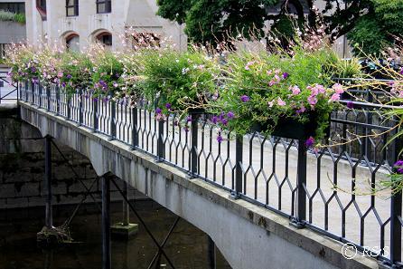aカンペールー橋の花17IMG_2328
