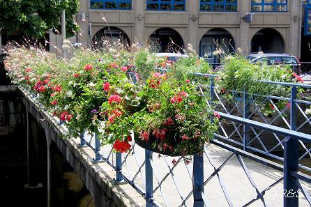 aカンペールー橋の花18IMG_2329