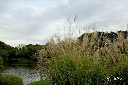 新宿御苑3IMG_5224