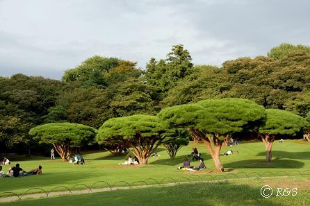 新宿御苑4IMG_5229