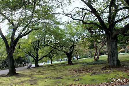 新宿御苑6IMG_5233