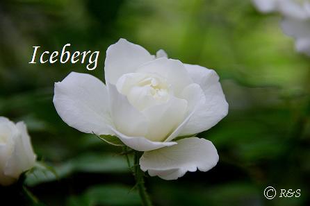 zアイスバーグ9IMG_5597