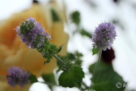 ジャンヌダルクの花瓶22IMG_9054