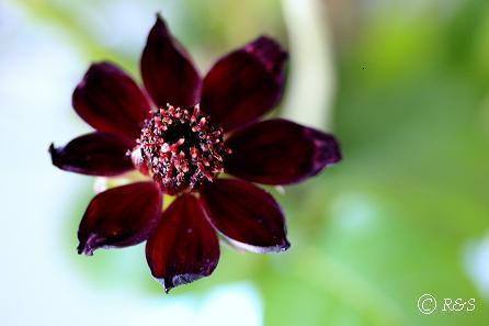 ジャンヌダルクの花瓶42IMG_9116